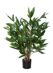Dracaena Surculosa w pot 60 cm  Verde